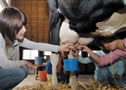 Milking experience