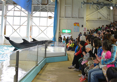 South American sea lion and dolphin show (Dolphin stadium)